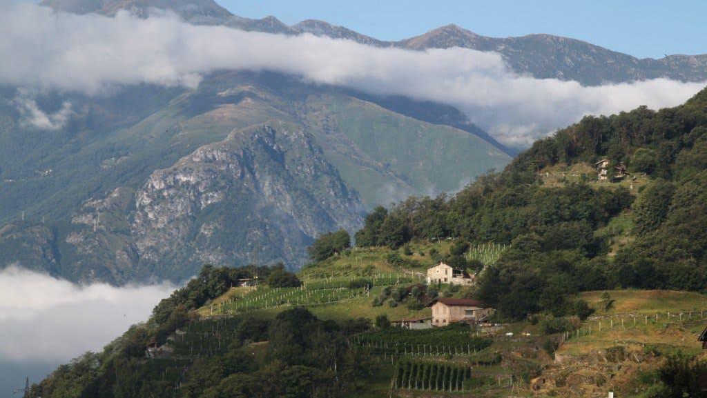 Produção vinícola nas encostas das montanhas na Lombardia